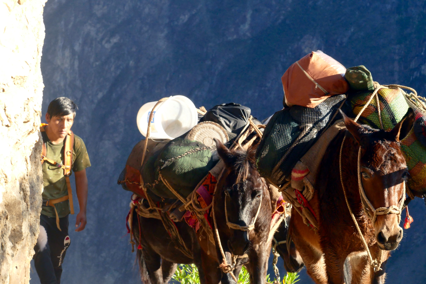 local with pack donkeys on the Choquequirao track